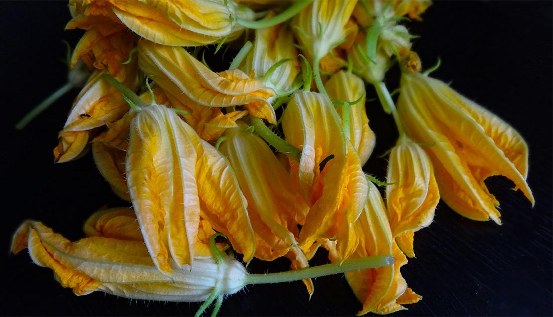 цветы кабачклв